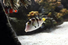 Fish in Auqarium Stock Photos