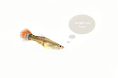 Fish on the background Royalty Free Stock Image
