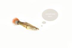 Fish on the background. Isolation,think box,idea box Royalty Free Stock Image