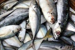 Fish Background Royalty Free Stock Photo