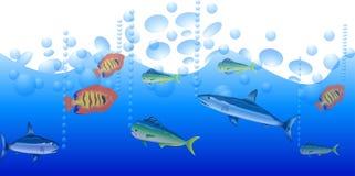 Fish background Royalty Free Stock Photos