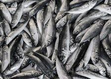 Fish background Royalty Free Stock Image
