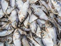 Fish background. Dry sardines on the basket ; fish background Stock Photography