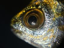 The fish background unit isolate. Natural Royalty Free Stock Photos