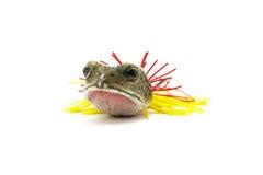 Fish bait Stock Images