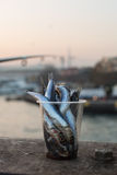Fish bait, Istanbul, Turkey Royalty Free Stock Photography