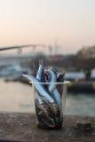 Fish bait, Istanbul, Turkey Royalty Free Stock Photography