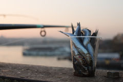 Fish bait, Istanbul, Turkey Stock Photography