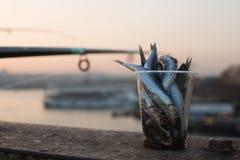 Fish bait, Istanbul, Turkey Stock Photography