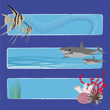 Fish banners 2 no text. Three tropical fish banners no text indicate sea world creatures Royalty Free Stock Image