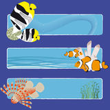 Fish banners 3 no text. Three tropical fish banners no text indicate sea world creatures Stock Photography