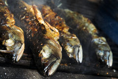 Fish barbecue. Baked fish on the grill stock photography