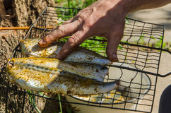 Fish barbecue. In forest picnic royalty free stock photos