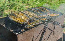 Fish barbecue. In forest picnic stock image
