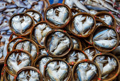 Fish in barrels for sell at market Royalty Free Stock Images