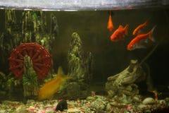 Fish in a basin, small fish stock image