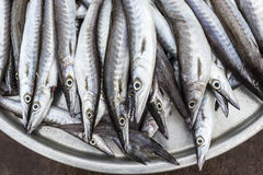 Fish in basket (ribbonfish) Royalty Free Stock Image