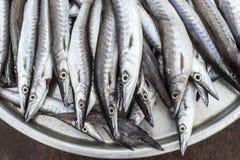 Fish in basket (ribbonfish) Royalty Free Stock Image