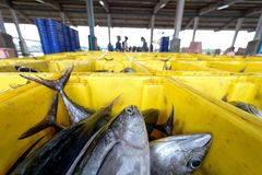 Fish in basket. Thailand fish market many fish in basket for sale Stock Image