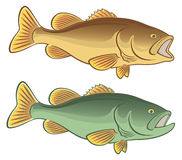 Fish bass. The figure shows fish bass Royalty Free Stock Photography