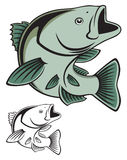 Fish bass. The figure shows  fish  bass Royalty Free Stock Photos