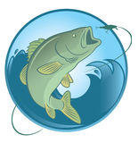Fish bass. The figure shows fish bass Royalty Free Stock Photo