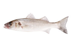 Fish bass isolated Royalty Free Stock Images