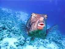 Fish. Beautiful fish of the red sea Royalty Free Stock Photos
