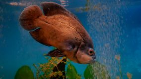 Fish beautiful underwater in ocean. Fish swim in a sea of beautiful video 4k ocean stock footage