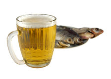 Fish beer Stock Images