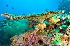 Fish beneath table coral branch Stock Image