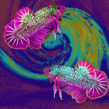 Fish - Betta Siamese, drawing on the mosaic background. Stock Photography