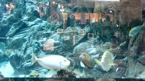 Fish in the big aquarium in Ocean Plaza mall stock footage