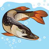 Fish, big pike, vector illustration Stock Photography