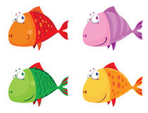 Fish big set Stock Photo