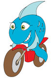 Fish bike. A joyful blue fish riding a motor-bike royalty free illustration