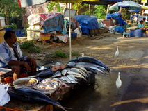 FISH BIRDS. Vendor selling fish in a market calicut, India Royalty Free Stock Photo