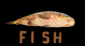 Fish on the black. Stock Photography