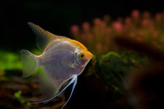 Fish on a black background Stock Photography