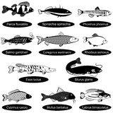 Fish black collection. Vector black collection of different fishes,  over white background Stock Photos