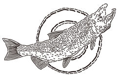 Fish, black contour on a white background Royalty Free Stock Images