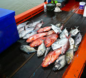 Fish on boat. Many Fishes on fisherman boat Royalty Free Stock Photography