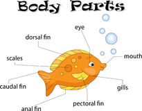 Fish body parts. Animal anatomy in English Stock Images