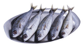 Fish bogue. Five fish bogue on the tray with white background stock photo