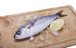 Fish bogue with lemon. On white background stock image
