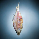Fish-bone. The suspended skeleton of a fish Stock Photography