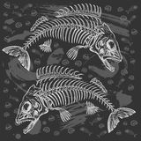 Fish bone drawing Stock Photos