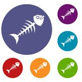 Fish bone icons set. In flat circle red, blue and green color for web Royalty Free Stock Photo