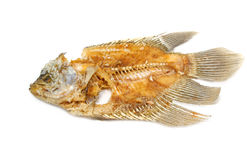 Fish bone  Stock Photography