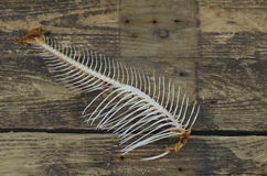 Fish bone Stock Image